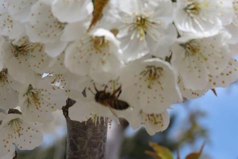 אביב במרום גולן